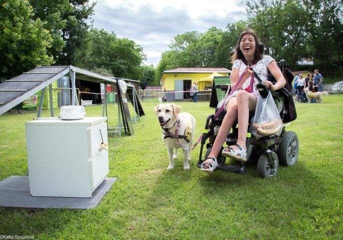 Asistenční pes není zcela hrazen státem, vodící pes ano