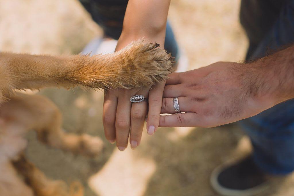 Nikdy mezi psy nedávejte ruce. Snažte se agresora chytit za slabiny