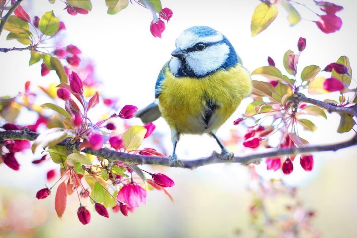 Když se budete v přírodě chovat tiše, odmění se vám překrásným koncertem.