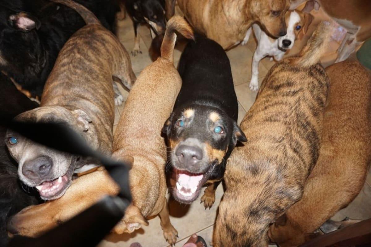 Ložnici obsadilo 79 psů bez domova.