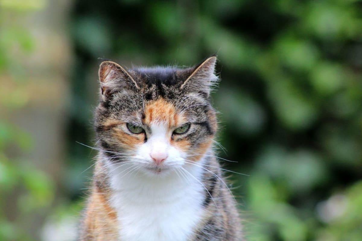 Nejen psi, ale i staré kočky v útulcích kvůli nezájmu dožívají.