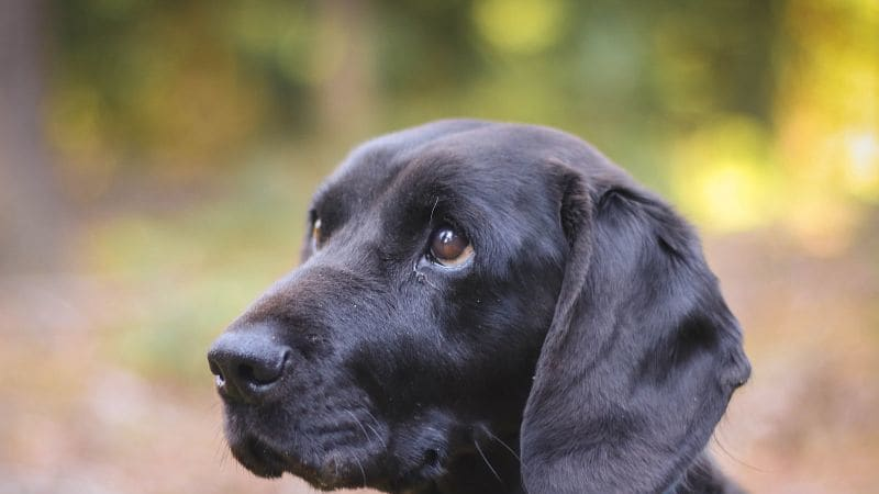 Čagin je milující devítiletý pes