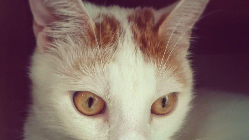 Při hledání ztracené kočky je nejdůležitější trpělivost.