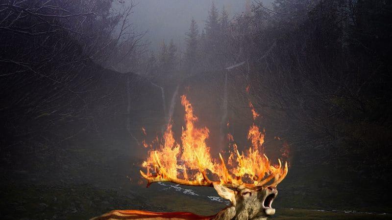 Plameny a hustý dým - to všechno zvířata ohrožuje na životě.