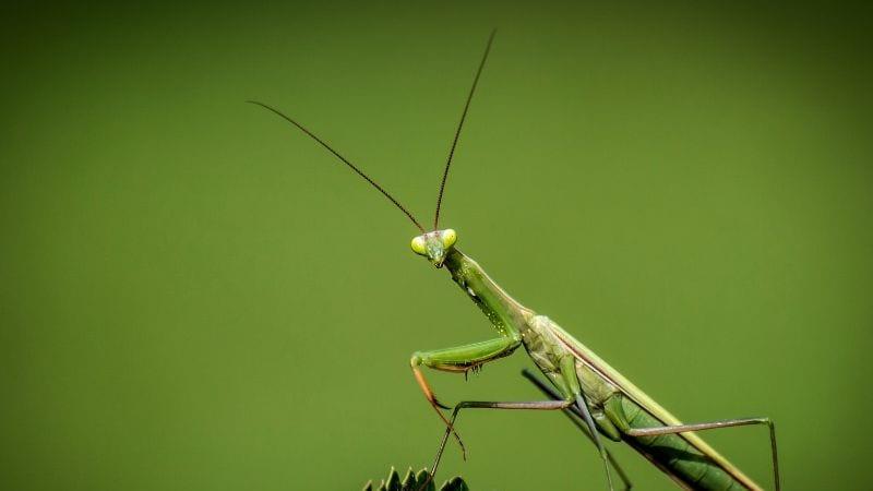Hmyz je nepostradatelnou součástí života na Zemi.