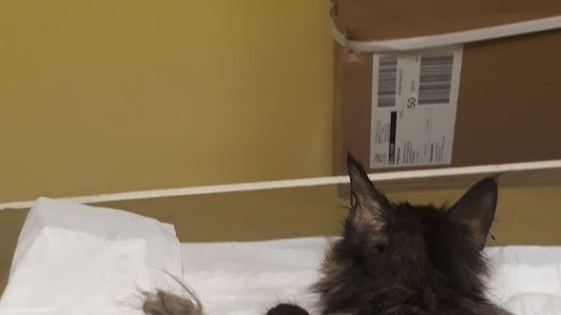 Kočky při odběru
