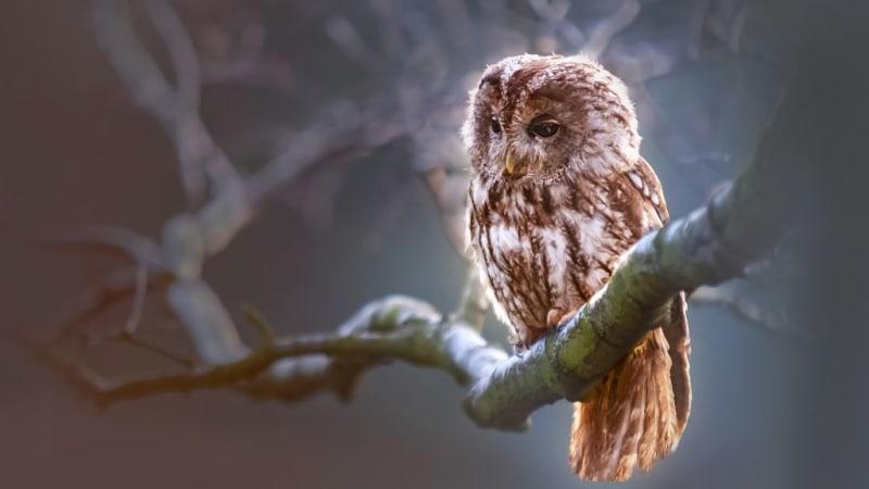 S puštíkem bělavým se můžeme setkat jak ve dne, tak za soumraku. Pověst praví, že se ukáže jen tomu, kdo se v přírodě bude chovat slušně.