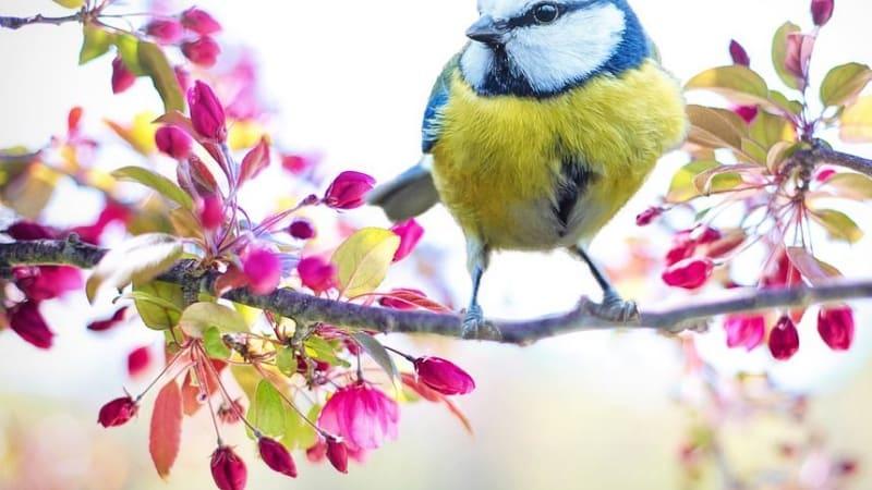"""Sýkorky jsou dalším důkazem, že """"ptačí mozeček"""" neexistuje."""