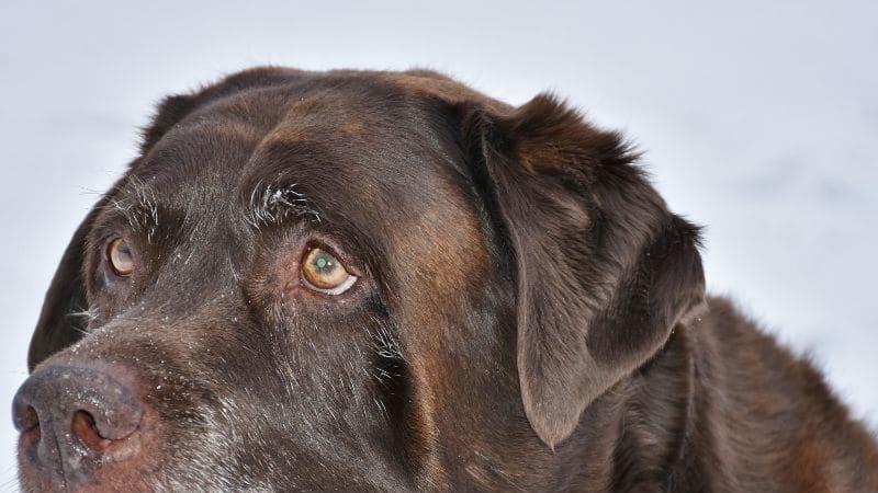 Starý pes může být ještě několik let vaším nejlepším přítelem.