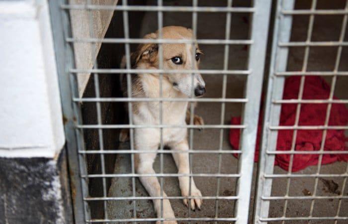 Namísto podpory kastračních programů se Rumunsko rozhodlo vyřešit problém přemnožených psů svéráznějším způsobem - po 14 dnech v útulku jsou utráceni.