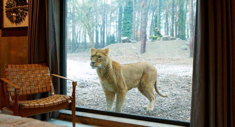 Lví pokoj. V rezervaci organizují třeba i svatby
