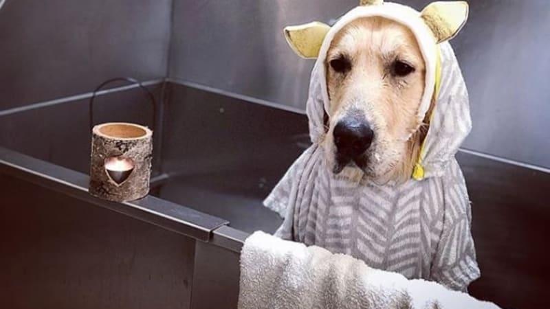 Udržováním svého mazlíčka v čistotě pomáháte jeho zdraví