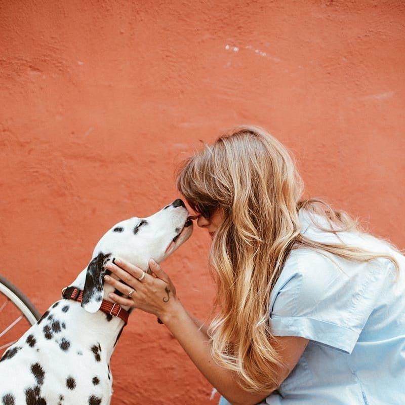 Od letošního roku máme povinnost registrovat psy starší 3 měsíců