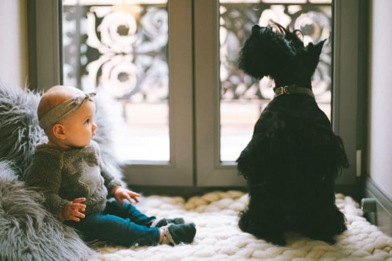 Domácí zvířata mají na vývoj dítěte mnoho pozitivních vlivů