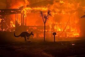 Leonardo DiCaprio podpořil i boj proti australským požárům.
