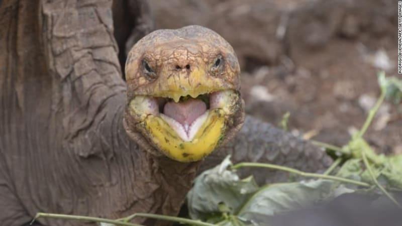 Díky záchovnému programu se podařilo zachránit želvy sloní. Diego se tak mohl vrátit domů.