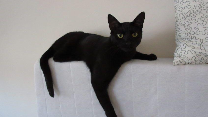 Fouska, čeká na novou rodinu v Domově Sluníčko. A nejen ona