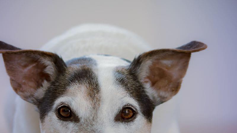Pes je nejlepší přítel člověka