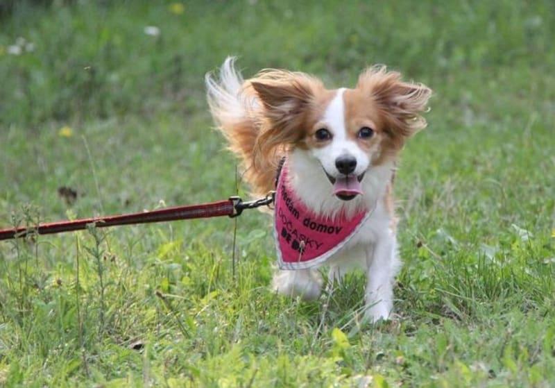 Bailey, roztomilka, která neměla moc štěstí.
