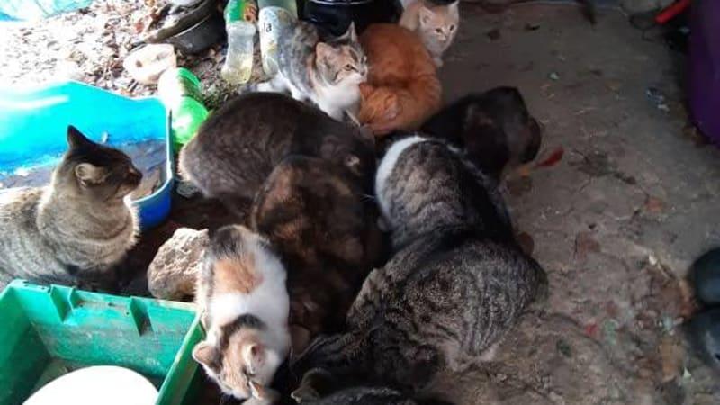 Kočičí kolonie Řepy.