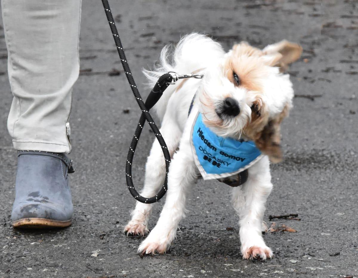 S každým psem je procházka jiná. Tedy přesněji - jinak děsivá.