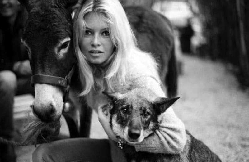Brigitte Bardot/ Facebook Cult Strawberry