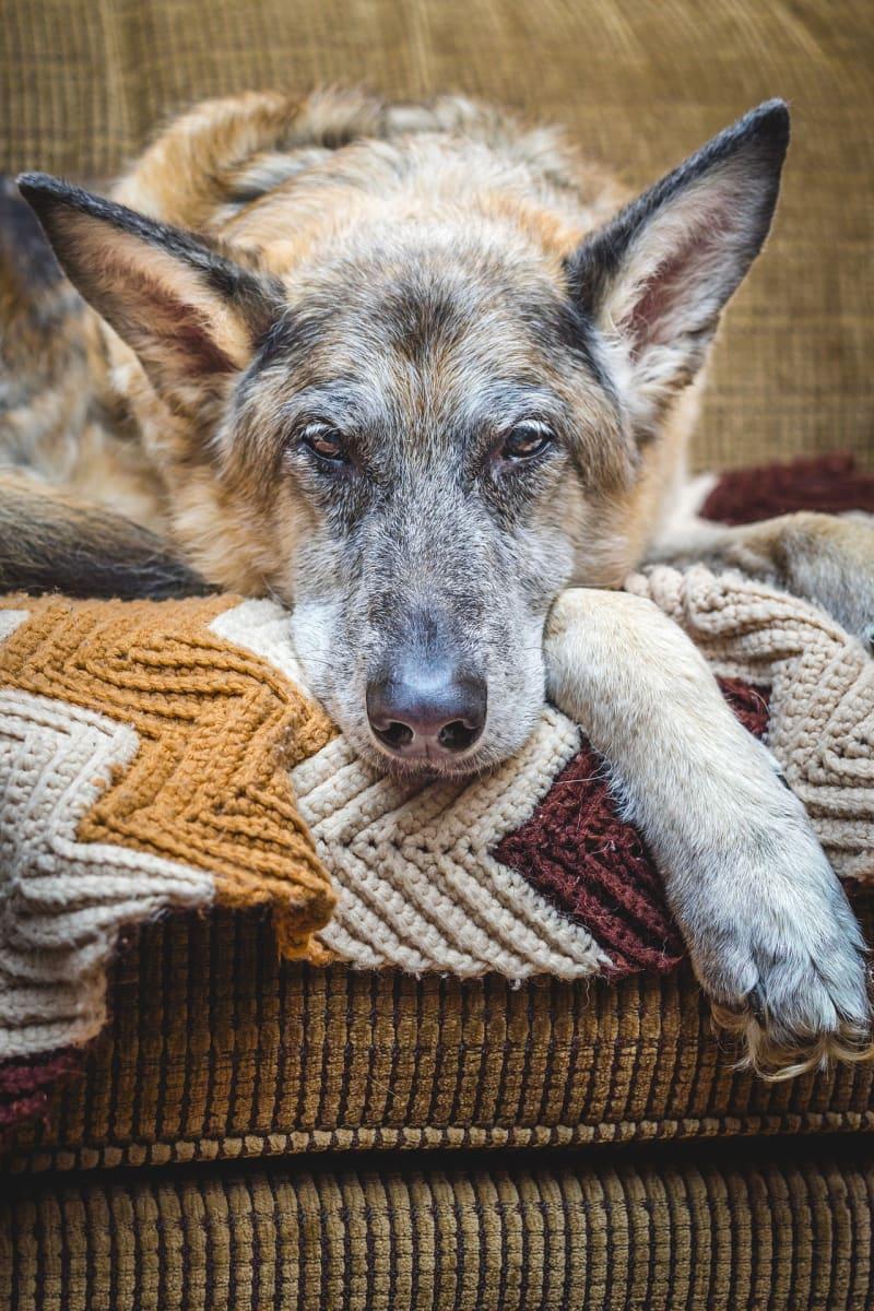 Stejně jako lidé, stárnou i zvířata. Jak o ně pečovat?