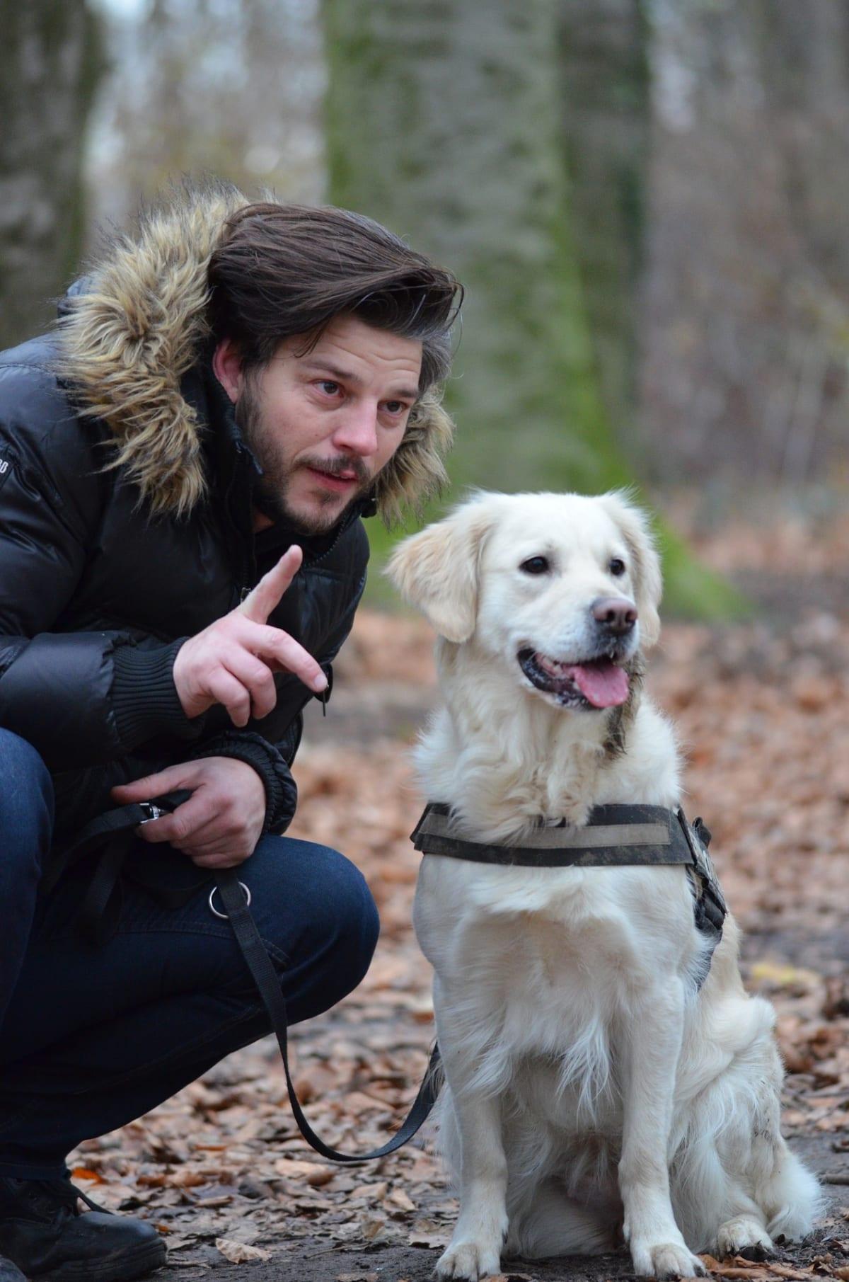 Stejně, jako u malých dětí, je psy nejprve potřeba naučit sedět a teprve až pak trénovat chůzi na vodítku.