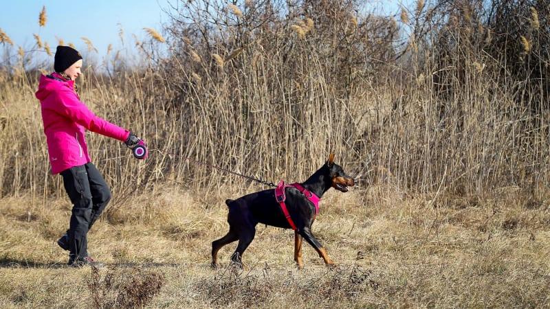 Pro psy, kteří tahají, není navíjecí vodítko vhodné a řešení případného konfliktu s jiným psem může pěkně zkomplikovat.