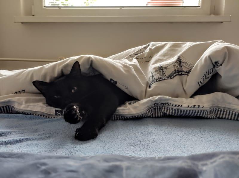 Jeden z Nutelliných rituálů - zavrtá se do peřiny, spí a je děsně roztomilá.