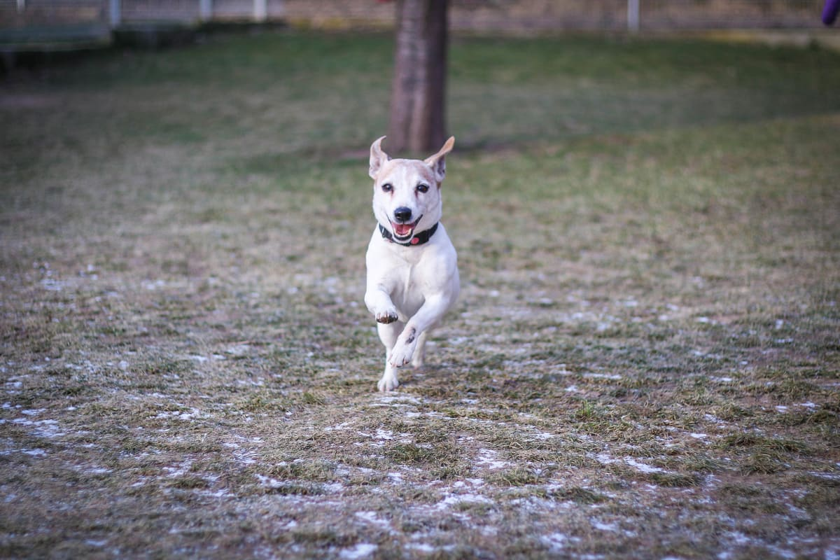 Haryk hledá domov/ útulek Dogpoint