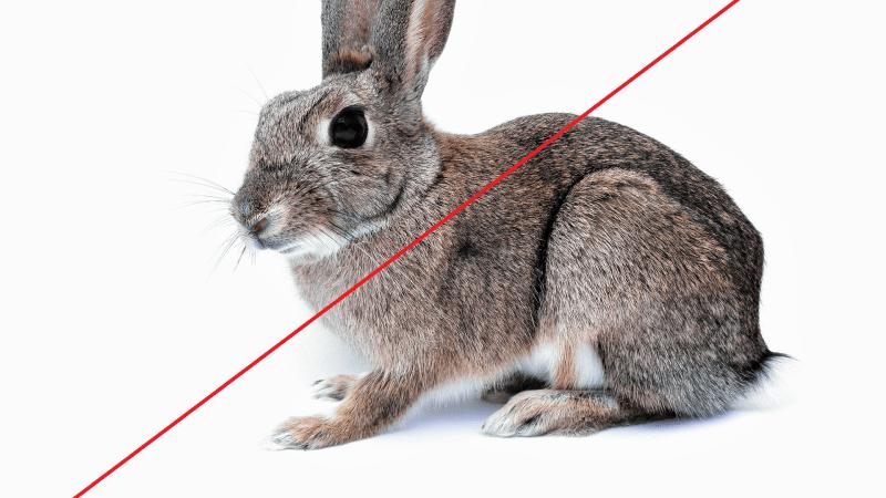 Jak je to s testováním na zvířatech v kosmetice?