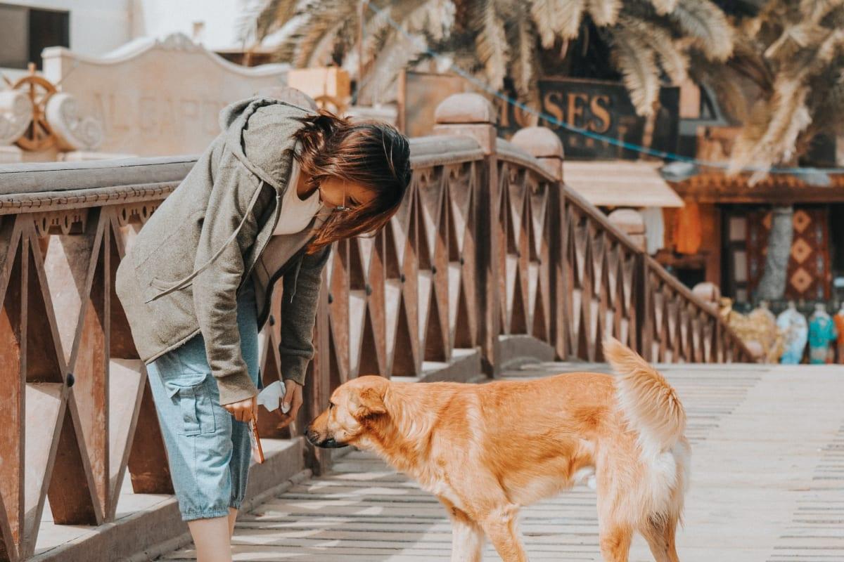 Dobrovolníci nabízí venčení psů