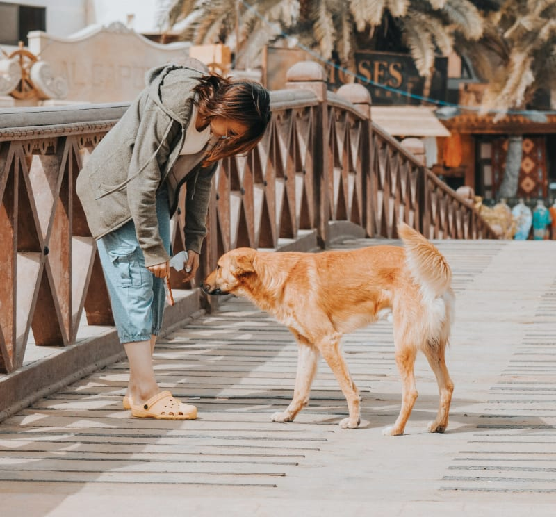 Naučit psa na přivolání je jedna z nejdůležitějších věcí