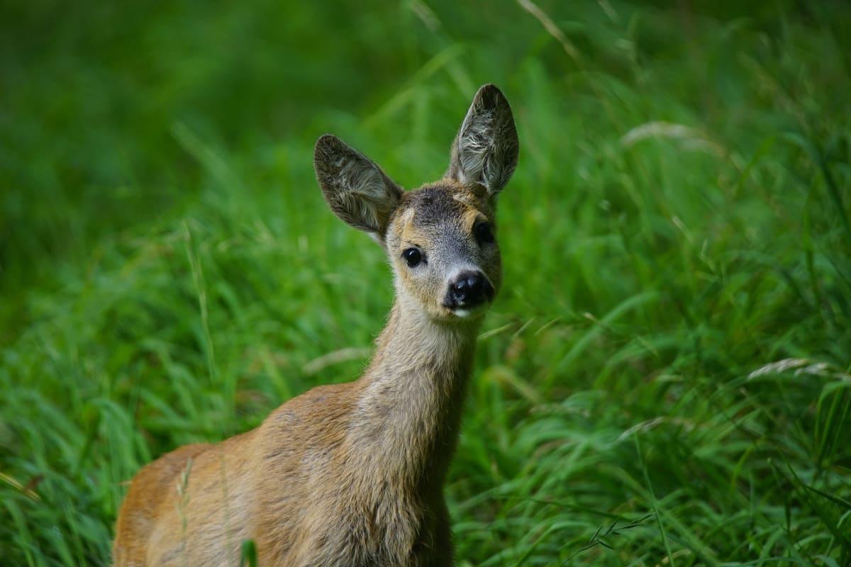 Jsou to neskutečně něžná stvoření, která cítí to, co my. Včetně strachu, který je může stát i život.