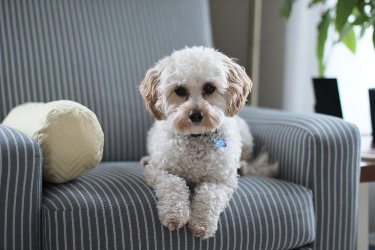 Nejlepší je připravovat psa na samotu od štěněte.