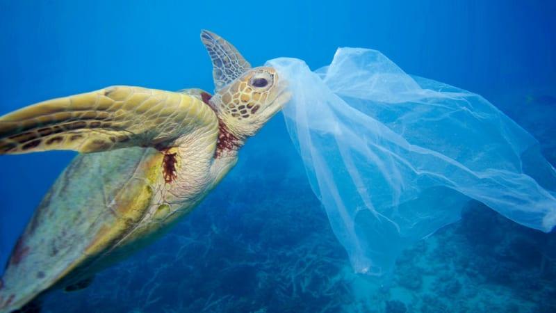Plastový odpad, který se dostane do moře, má smrtící dopady.