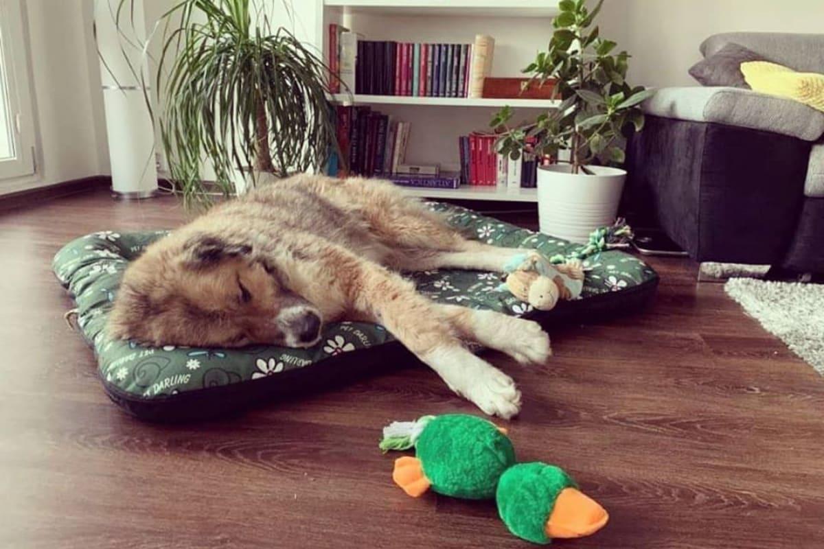 Tarra v novém domově/útulek Dogpoint