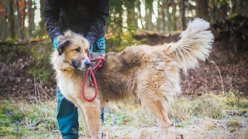Tarra je dvouletá psí holka/ útulek Dogpoint