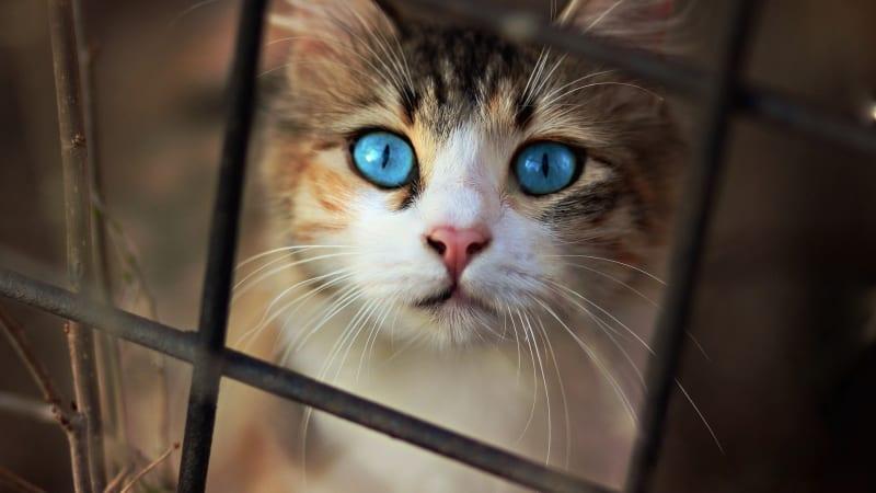 Zvířata nám během plošné karantény mohou pomoci nezbláznit se. Měli bychom ale myslet i na jejich zdraví.