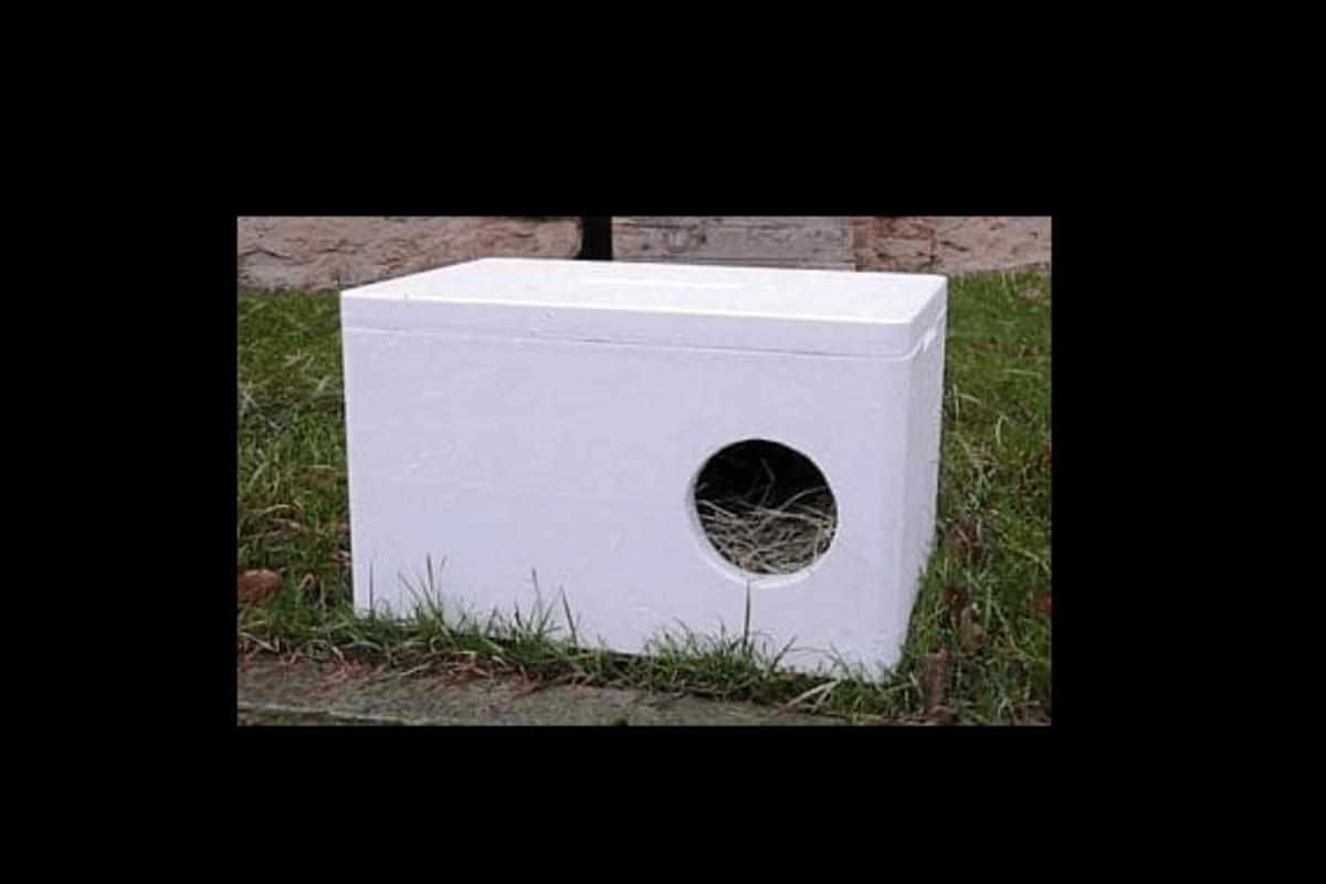 Boudičky jsou  k odběru zdarma a toulavým kočičkám tak určitě zpříjemníte život. Zdroj: Feliti kastruje