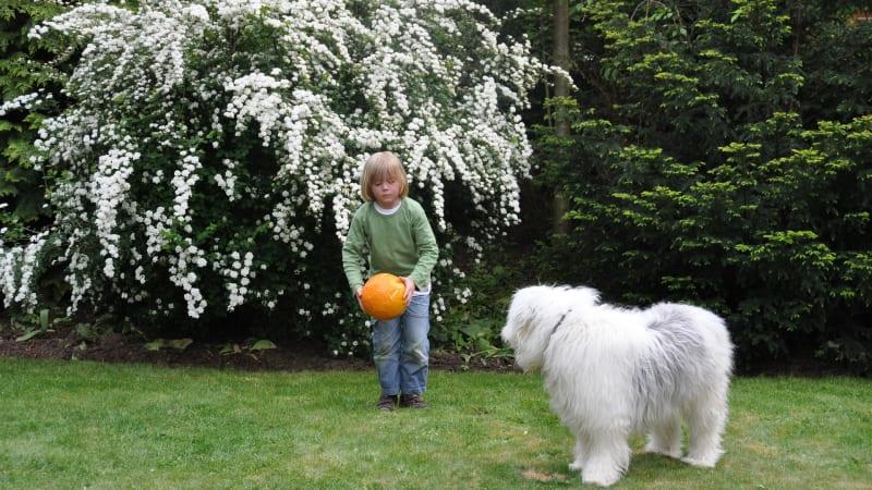 """Pokud máte zahradu, jste zachráněni. Pokud ne, musíte se svým psem z """"karantény"""". Kdo vám když tak s venčením pomůže?"""