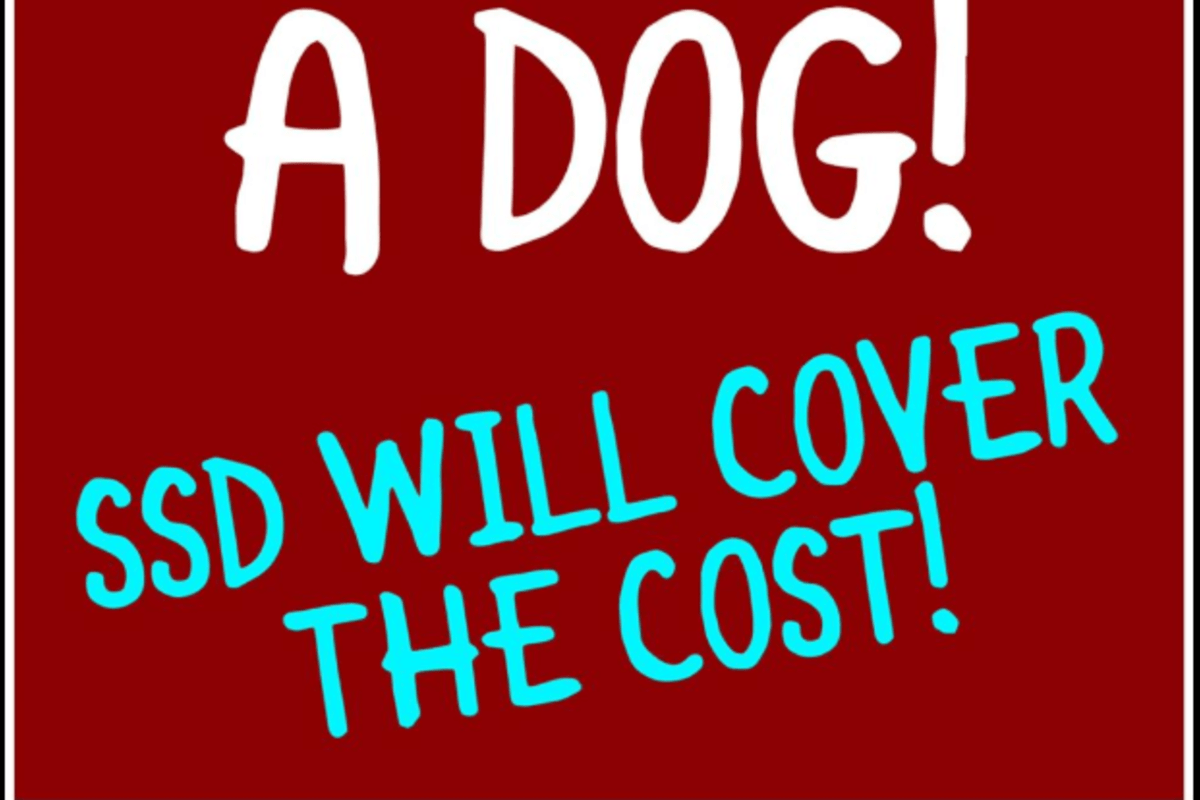 Staňte se pěstouny a Susie ´s senior dogs se postará o náklady