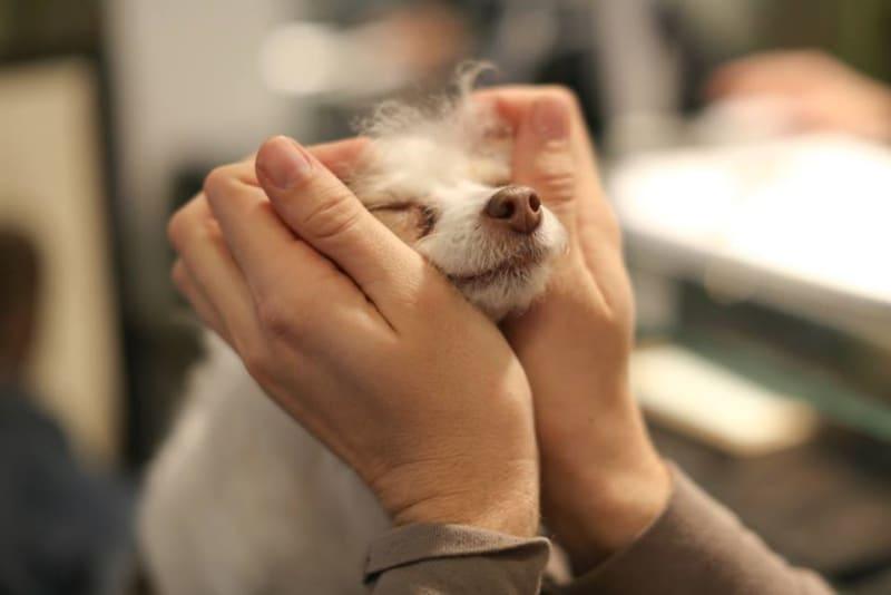 Adopce Susie spustila boj za adopce starších psů/Susie's Senior Dogs