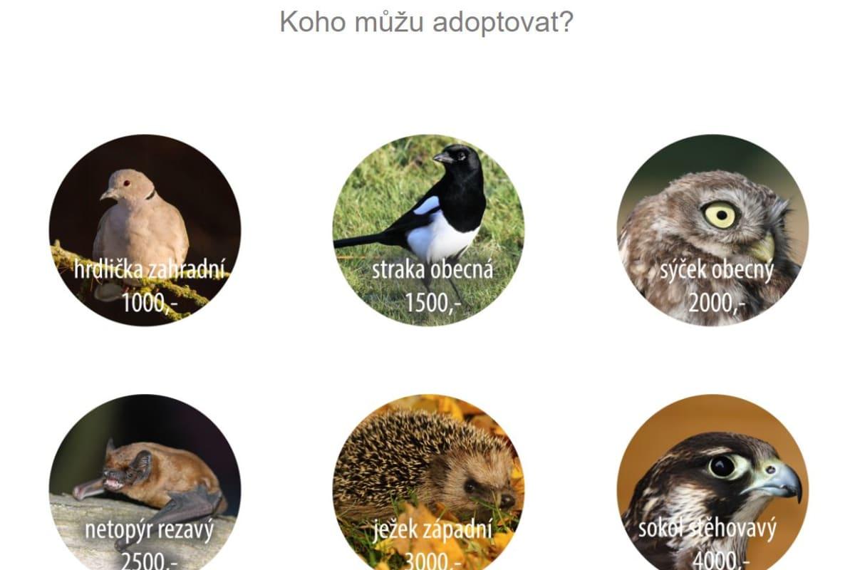 Adoptovat živočicha na dálku můžete i v Záchranné stanici na Huslíku.