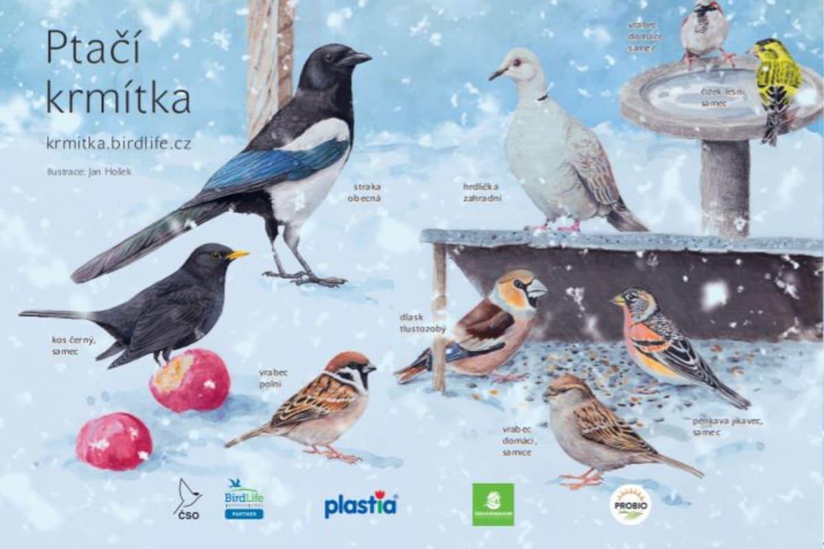 Poznáte ptáčky, kteří navštěvují vaše krmítko? Zdroj: ČSO