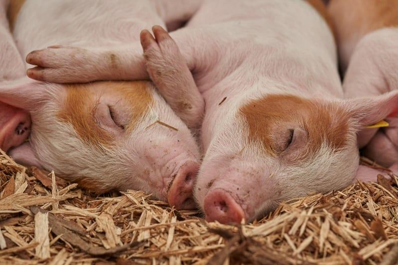 Víte, co (ne)víte o hospodářských zvířatech?