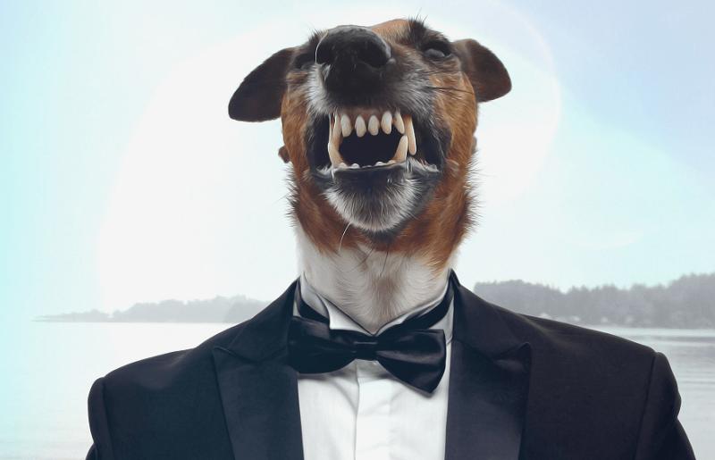 Proč se psi tak rádi válejí v ho*nech a mršinách?