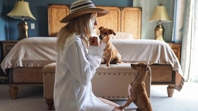 Máte čas navíc a chcete ho využít smysluplně? Můžete pomoci zvířatům třeba tím, že jim nabídnete dočasnou péči.