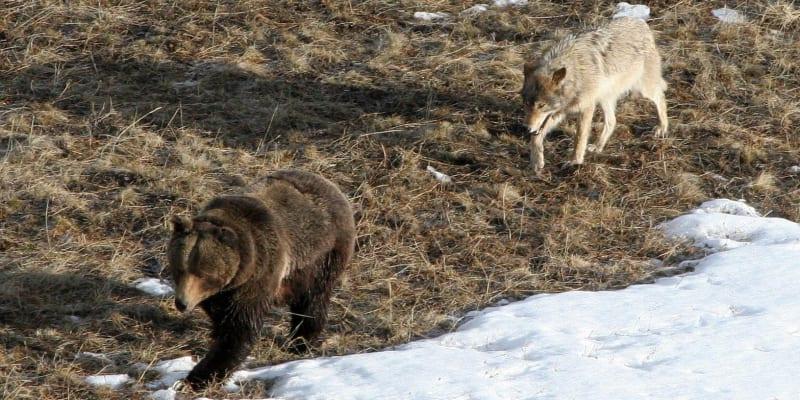 Medvědi a další zvířata se teď v parku objevují častěji než obvykle.